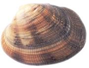 image186b
