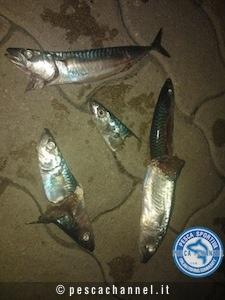 pesca serra 05