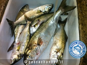 pesca serra ottobre 1