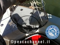 nassa pesca spigola bolognese gambero