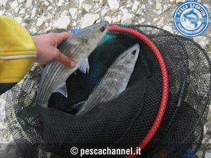 pesca al cefalo con galleggiante3